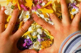 Hände von KindBlüten von Taubnessel Löwenzahn Gänseblümchen